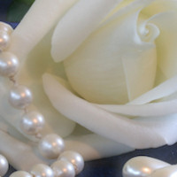 'EXCLUSIVE  WEB SET- ''ROSES AND PEARLS 4'