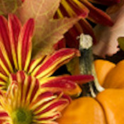 HOLIDAY WEBSET 10424-'HAPPY THANKSGIVING DAY!'